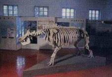 1988-古动物展
