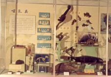 1988-馆藏珍稀脊椎动物展
